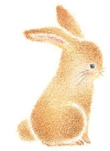 rabbit_e
